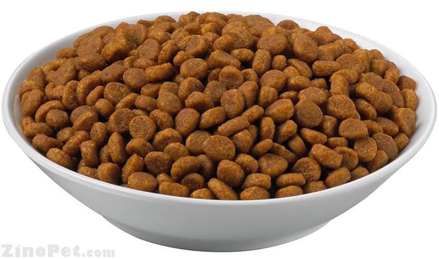 انواع غذای خشک گربه